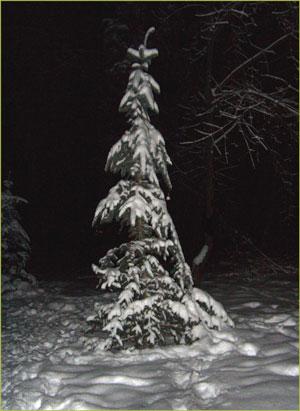 Новый год в лесу под ёлкой