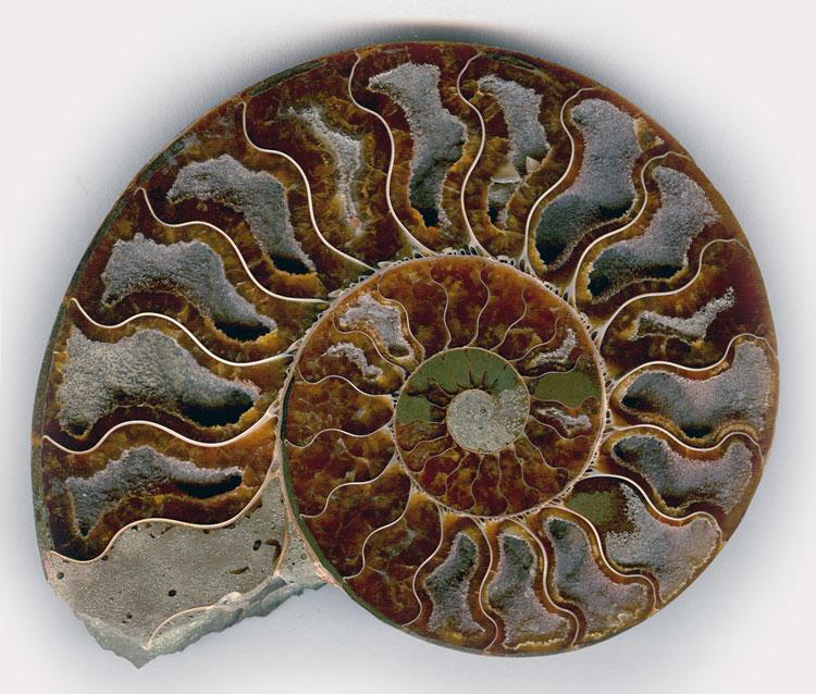 древние моллюски фото