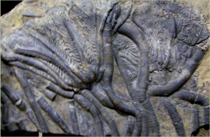 Окаменевшие раковины моллюсков 1000 рублей 1991
